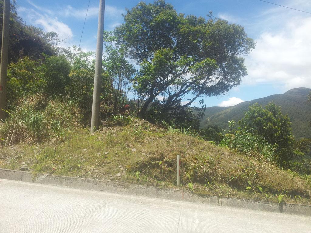 Venado en vía Loja - Zamora